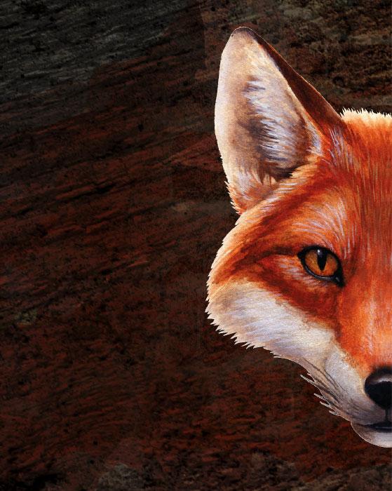 Room Fox Fuchs Bild